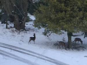 deer on phone jan 2015 007